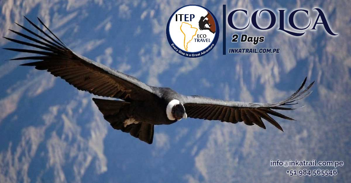 flight of condor,condor,cusco,chonta,limatambo