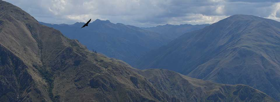 Filght of Condor, Cusco in 1 day
